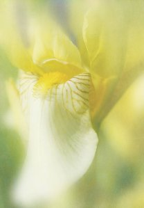 Iris by DeVaughn Squire at Etsy